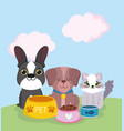 pet shop cute cat and dogs sitting with food vector image vector image