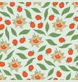 seamless pattern of ashwagandha vector image