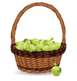 Basket of Green Apples3 vector image vector image