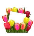 Red and yellow tulips vector image