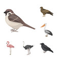 Types of birds cartoon icons in set collection for