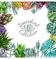 succulent plants collection vector image