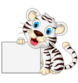 cute baby white tiger posing with blank sign vector image