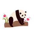 cute funny panda sitting on a tree vector image vector image