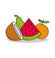 fruits coconut watermelon orange pear healthy food vector image