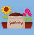 gardening banner with sack soil flowers roses and vector image