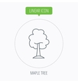 Maple tree icon Forest wood sign vector image