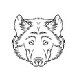 sketch of wolfs head portrait of forest animal vector image