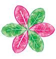 beauty flower watercolor paint