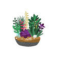 cartoon succulents composition vector image vector image