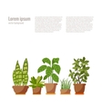 Set of potted plant isolated vector image vector image