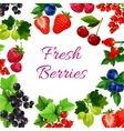 Twigs with berry or fruit food poster vector image