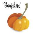 orange pumpkin isolated on white background vector image vector image