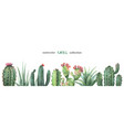 Watercolor banner of cacti and succulent