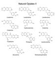 Chemical formulas of main natural opiates vector image vector image
