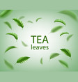 green tea background realistic tea leaves whirl vector image