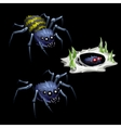 Two spider and grass in web vector image