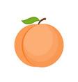 cartoon peach isolated on vector image vector image