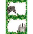 a set of zebra on nature frame vector image vector image