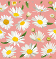 Floral seamless pattern with chamomile flowers