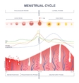 scheme of the menstrual cycle vector image vector image