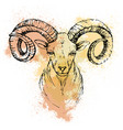 sketch pen a mountain goat head on a vector image vector image