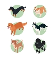 Collection of isometric dogs2 vector image