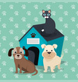cute mascots pet shop icons vector image vector image