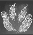 feather hand drawn sketch vector image