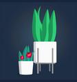 indoor green plants in white flower pots vector image