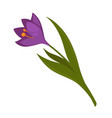 plant with purple blossom and green leaves vector image vector image