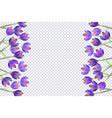 purple tulip flowers border frame vector image