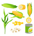 sweet corn set fresh corncobs popcorn canned vector image vector image