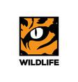 wild tiger leopard jaguar cheetah cat eye safari vector image