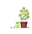 bottle with medical marijuana and medical vector image
