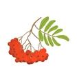 Branch of red rowan cartoon icon vector image vector image