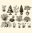 garden plants gardening and planting with vector image vector image