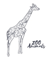 Hand drawn isolated sketch giraffe Zoo animal vector image