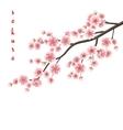 Realistic sakura blooming flowers EPS 10 vector image vector image