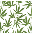 seamless pattern with cannabis leaves on white vector image