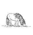 sketch grazing horse with long mane hand vector image