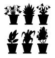 black silhouette set flowers in pots indoor vector image vector image