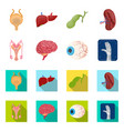 design of body and human sign collection vector image