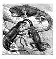 Green lizard engraving vector image vector image