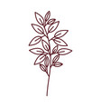 branch with leaf isolated icon vector image vector image