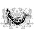 black and white dolphin against sacred geometry vector image vector image