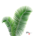 Coconut leaves design background vector image