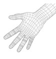 human hand wire-frame vector image vector image