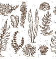 seaweed underwater plants and corals or sponges vector image