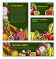 templates of exotic fresh tropical fruits vector image vector image
